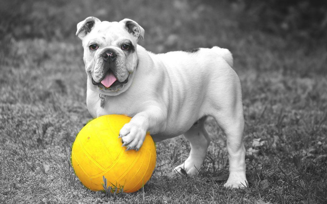Dog Days – New Dog Park in Lakeland!